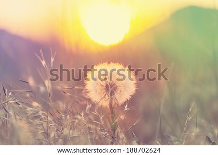 Spring flowers meadow - stock photo