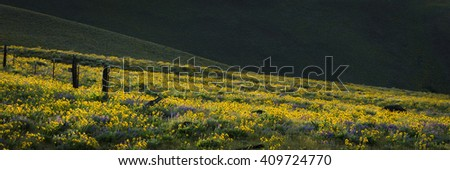 Spring flowers mear the Columbia River Gorge - stock photo