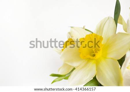Spring flowers. Narcissus bouquet (selective focus)
