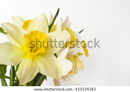 Spring flowers. Narcissus, daffodil (selective focus)