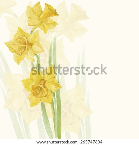 Spring flowers narcissus. Floral background, invitation or greeting card. Watercolor hand drawn  illustration. - stock photo