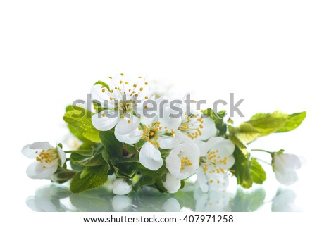 spring flowers of fruit trees  - stock photo