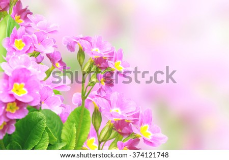 Spring flowers of lilac color - stock photo