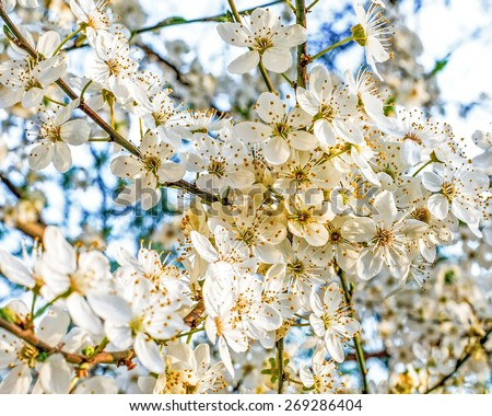 spring flowers on a branch - stock photo