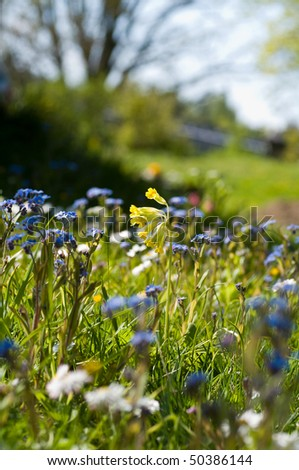 spring flowers on green patch of grass - stock photo