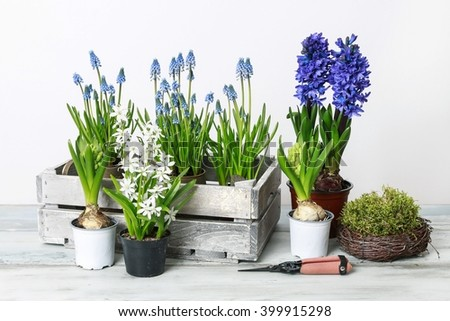 Spring flowers on wooden table, white background. - stock photo