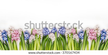 Spring flowers panorama with fresh colorful Hyacinths on white wooden background, top view. Floral border. Banner for website. - stock photo