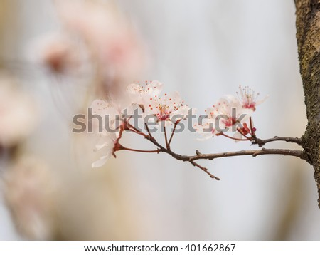 plum branch buddhist single men What are the main branches of buddhism stele of the buddha maitreya, 687 before this time, however, buddhist doctrine had been transmitted to sri lanka.