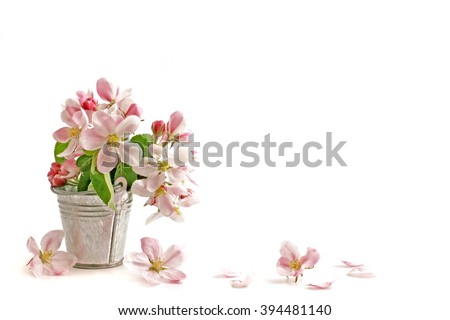 Spring flowers. Spring flowers - apple branch in vase. Spring flowers isolated on white background. Card with spring flowers.  Spring flowers on white with copy space.  Spring flowers border. - stock photo
