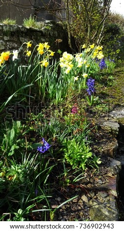 Spring flowers wave prettily gentle breeze stock photo royalty free spring flowers wave prettily in a gentle breeze with warm spring sunshine falling on their bright mightylinksfo