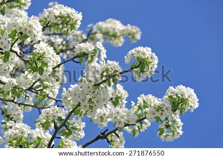 Spring flowers with blue sky in background  - stock photo