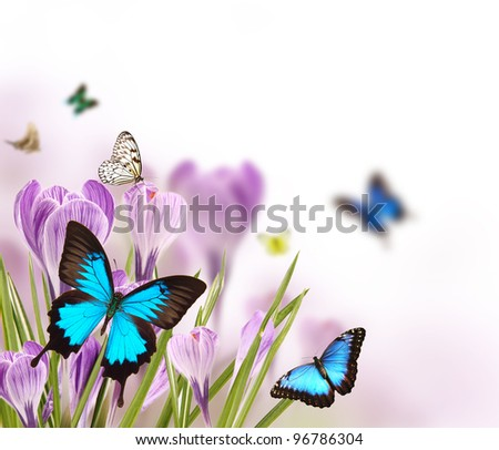 Spring flowers with butterflies - stock photo