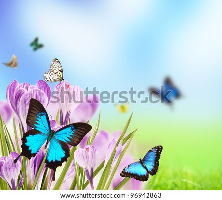 Spring flowers with butterflies