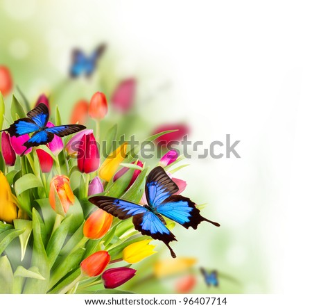 Spring flowers with exotic butterflies - stock photo