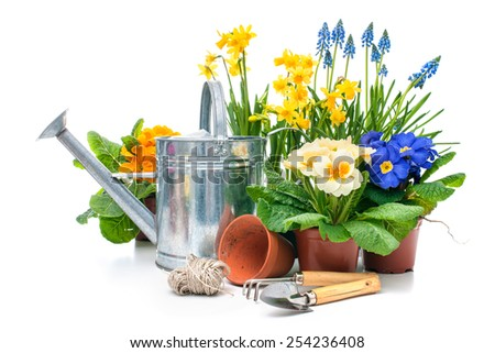 Spring flowers with gardening tools isolated on white background - stock photo