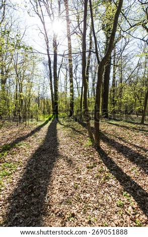 Spring foliage in a forest, on a bright sunny day -light and shade effect - stock photo