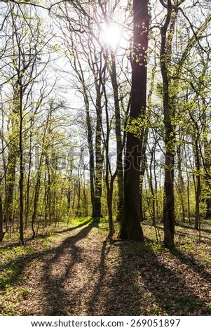 Spring foliage in a forest, on a bright sunny day -light and shade effect