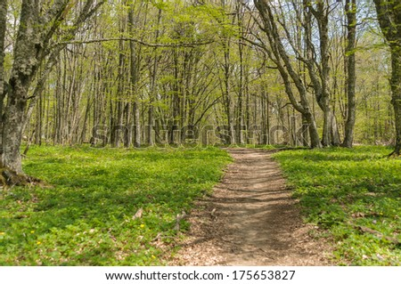Spring forest alley
