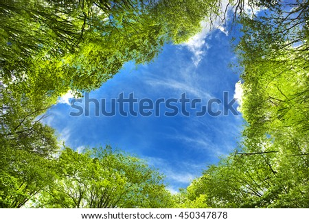 Spring forest and top view