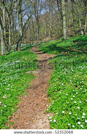 Spring forest footpath - stock photo