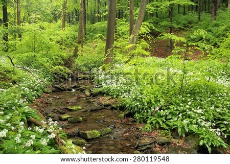 Spring forest in May. - stock photo
