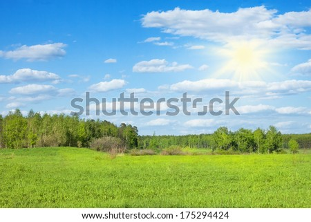 spring forest in sunny day - stock photo