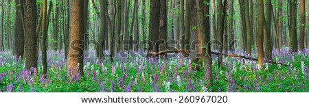 Spring forest. Landscape panorama. The first flowers - stock photo