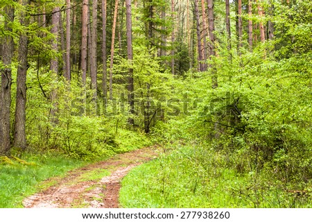 Spring forest landscape, road among deciduous trees fresh young leaves, nature backgrounds - stock photo