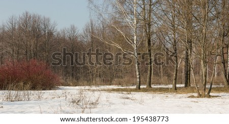 Spring forest landscape. Seasons. Panorama