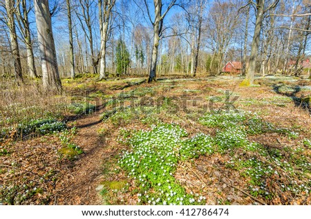 Spring forest meadow in Sweden - stock photo