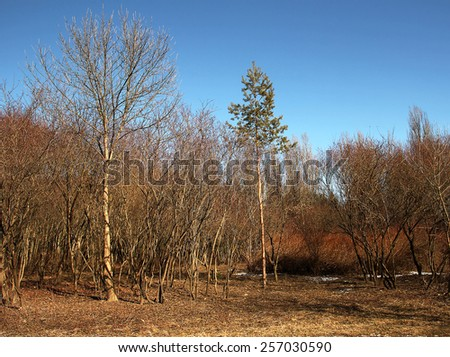 Spring forest park sky - stock photo
