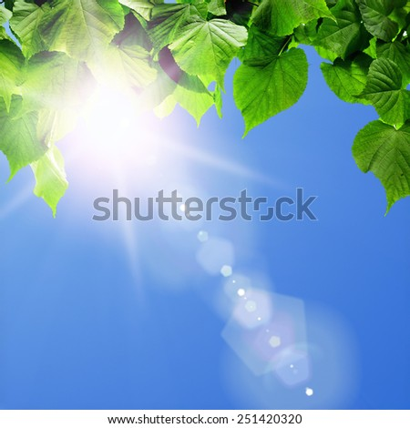 spring forest trees leaf. nature  green wood sunlight backgrounds.  - stock photo