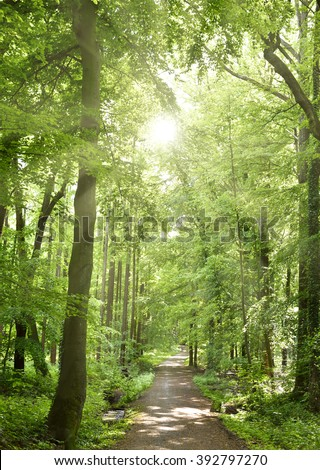 Spring forest with sunbeam and smooth light. Empty forest path with no people. Tranquil scene, nature background of a mixed forest. - stock photo