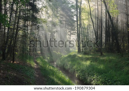 spring forest with sunbeams