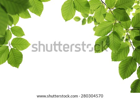 Spring frame, close up of natural green leaves isolated on white background with copy space - stock photo