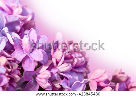 Spring frame with flowers of lilac close up. Delicate floral background.