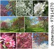 Spring garden. Beautiful blooming trees with white and pink blossom. - stock photo