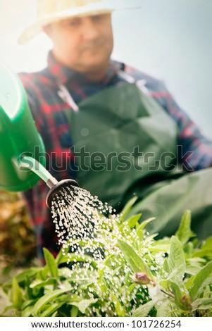 Spring garden concept. Male is doing garden work in herb garden - stock photo
