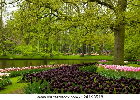 spring garden in Keukenhof, Holland - stock photo