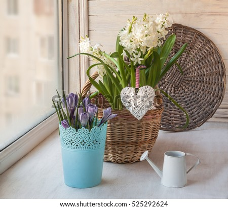 Spring Garden on the window of hyacinths and crocuses in pots in basket
