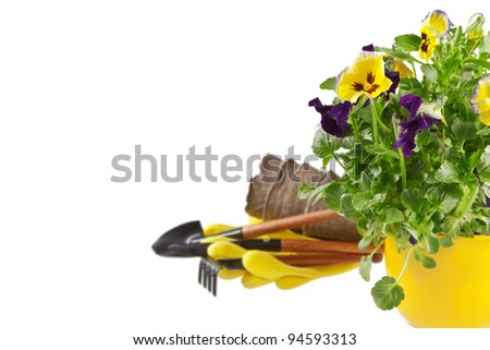 Spring gardening. Pot of pansies and garden tools on white - stock photo