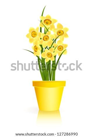 Spring Gardening. Yellow narcissus flowers in pot on white background. Raster illustration. Vector file included in portfolio - stock photo