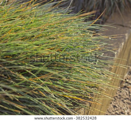 spring grass in drops of dew, natural background for your design - stock photo