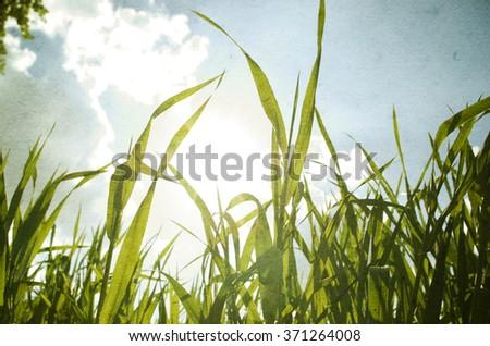spring grass in sun light - stock photo