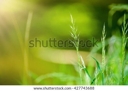 spring grass on Riverside with shallow focus. Tranquil scene. Spring countryside natural background with green colour. - stock photo