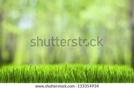 spring green abstract forest natural background - stock photo