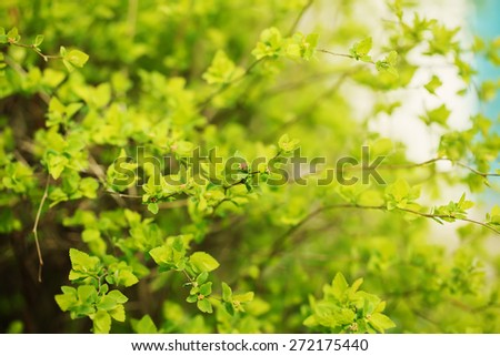 spring green bright branch with fresh green leaves, selective focus - stock photo