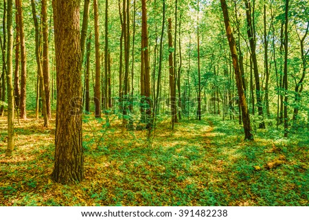Spring Green Deciduous Forest Woods. Beautiful Nature - stock photo