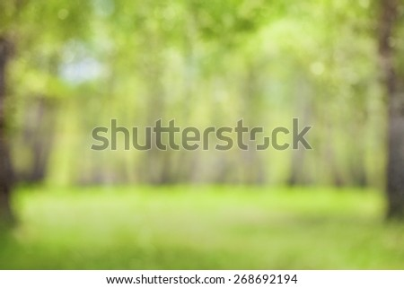 Spring green forest blurred or defocused background - stock photo