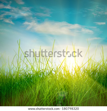 Spring green grass and sun on blue sky background - stock photo